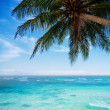Palm tree at the tropical beach — Stock Photo #38366831