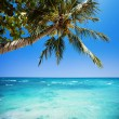 Tropical Heaven — Foto de stock #40052503