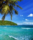 Tropical Heaven — Stock Photo