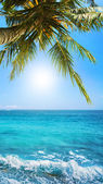 Paradis tropical — Photo