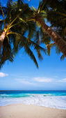Tropical Heaven — Stock Photo