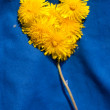 Stock Photo: Heart from dandelions