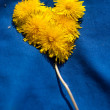 Heart from dandelions — Stock Photo
