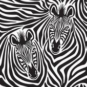 Zebra Couple — Stock Vector