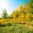 Beautiful view of autumn wood — Stock Photo #13374355