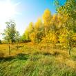 Beautiful view of autumn wood — Stock Photo