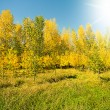 Stock Photo: Beautiful view of autumn wood