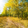 Beautiful view of autumn wood — Stock Photo
