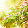 Fresh new green leaves and flowers - Foto Stock
