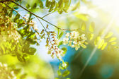 Fresh new green leaves and flowers — Stock Photo