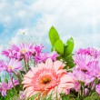 Summer pink flowers - Stock Photo