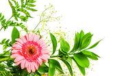 Gerbera flores e verde folhas — Foto Stock