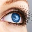 Stock Photo: Female blue eye with false lashes