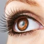 Постер, плакат: Woman brown eye with false lashes