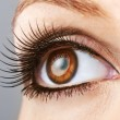 Woman brown eye with false lashes — Stock Photo #22953106