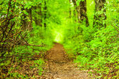 Defocus path in green forest — Stock Photo