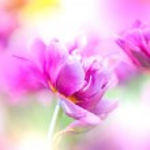 Defocus beautiful purple flowers. — Stock Photo