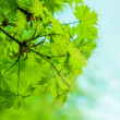 Defocus Fresh green leaves — Stock Photo
