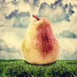 Yellow and red pear outdoor — Stock Photo