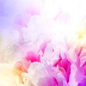 Güzel pembe çiçekler defocus. soyut tasarım — Stok fotoğraf