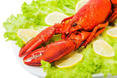 Cooked European common red lobster — Stock Photo