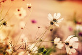 Defocus floral background with unreal colors — Stock Photo