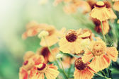 Defocus floral background with unreal color filters — Stock Photo