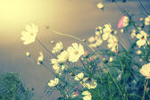 Defocus blur beautiful floral background.  — Stock Photo