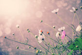 Defocus blur beautiful floral background. P — Stock Photo