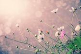 Defocus blur beautiful floral background. P — Stock Photo