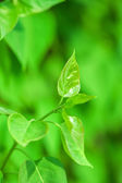 Fresh new green leaves and copy spase — Stock Photo