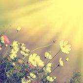 Defocus blur beautiful floral background — Stock Photo