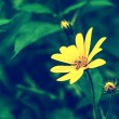 Yellow flower on green spring meadow — Stock Photo