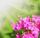 Defocus floral background.  — Stock Photo