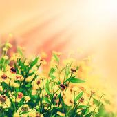 Foto macro vintage de campo de flores amarelas — Fotografia Stock