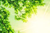 Defocus beautiful view of green leaves.  — Stock Photo