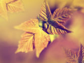 Odak çiçek arka plan bulanıklık — Stok fotoğraf