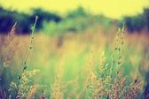 Defocus blur beautiful floral background. — Stock Photo