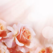 Defocus blur pastel floral background. — Stock Photo
