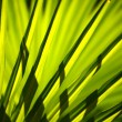 Green and bright palm leaves on blured background — Stock Photo
