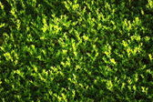 Green leaves wall background — Stock Photo