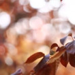 Beautiful brown leaves and bright sun over blurred background — Stock Video #12760193