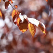 Beautiful brown leaves and bright sun over blurred background — Stock Video