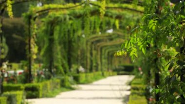 Green archway in a garden — Stok video