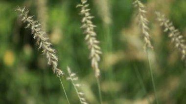 Green plants on blured backgorund — Stock Video