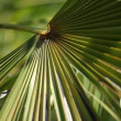 Green and bright palm leaves in the wind over blurred background — Stockvideo