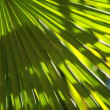 Green and bright palm leaves in the wind over blurred background — Stock Video