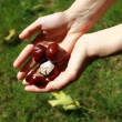 Handful of conkers with blurred green background — Video