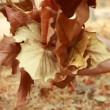 Woman's hands collecting autumn brown dry leaves — Stock Video