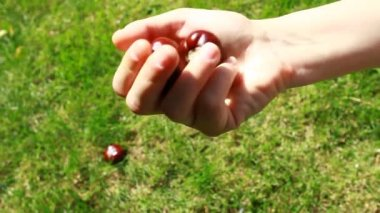 Handful of conkers with blurred green background — Stock Video
